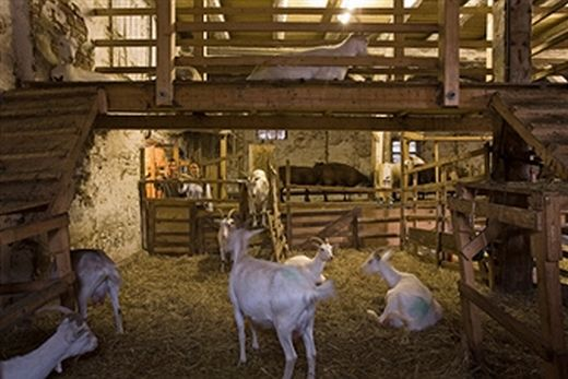 goat shelters for preppers